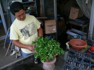 丸プランターにニチニチソウを植える