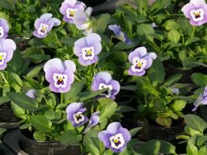 太陽光に背伸びする花々
