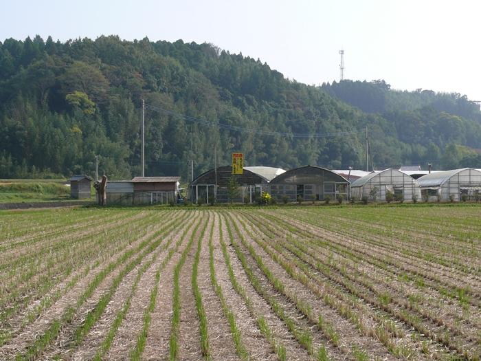 稲収穫後の風景