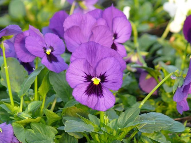 ご縁をつなぐ紫