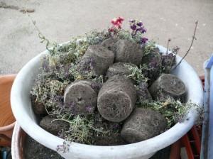 一度栽培したポットの黒土