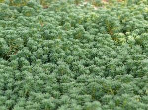 自然と生える苔たち