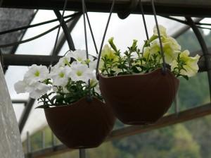 空間に花を植える