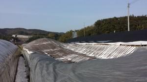 ピザ窯ハウスの屋根