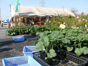 野菜苗と行平園芸さん