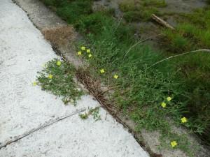 コンクリートと自然
