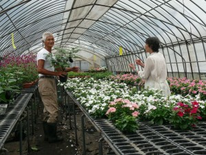 ミニ茄子栽培と談話