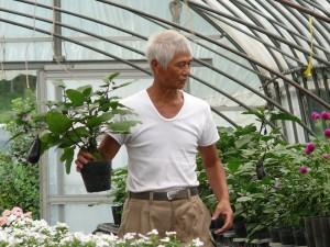 ミニナスのポット栽培