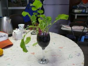 ワイングラスで栽培してみる