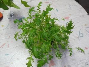 水菜栽培と穴のないコップ