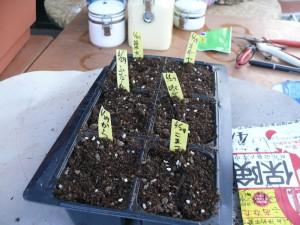 市販の土で葉もの栽培