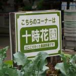 十時花園の特設コーナ