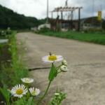 野に咲く花に蜂