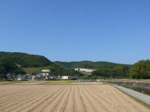 千歳町の稲収穫後