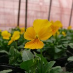 花々の色合い