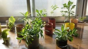室内に賑わう植物