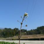 自然に咲く野花