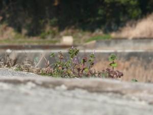 コンクリートと野花