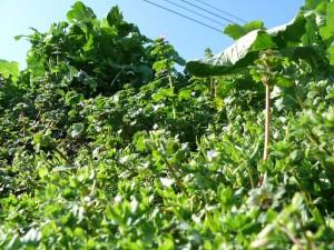 腐葉土と草木