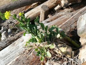 木と根と花と