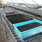 土という環境を整える