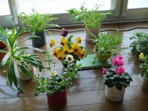 室内の花々と野菜