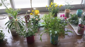 室内に春を迎える