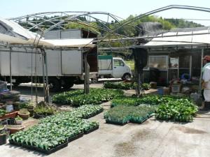 野菜苗の出荷2016年