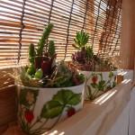多肉植物と庇