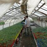 野菜苗の選択