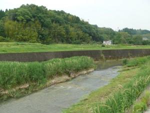 茜川の草刈り