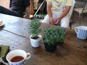 土の差が生む多肉植物の成長