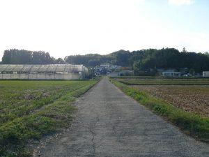 お店への道