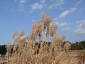 千歳町の空と草