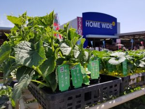 野菜の苗の売り場