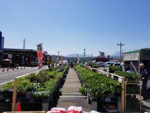 苗の売り場