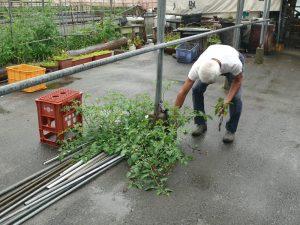 芽生える野菜