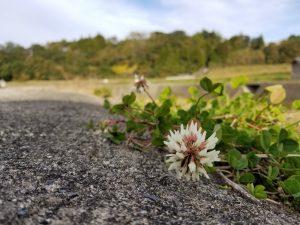 地道に咲くころあい