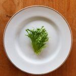 Frill-lettuce