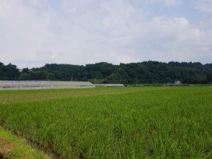 豊後大野市千歳町の風景2019年夏